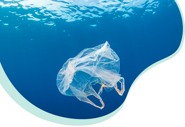 interdiction sacs plastique - végéos sacs compostables