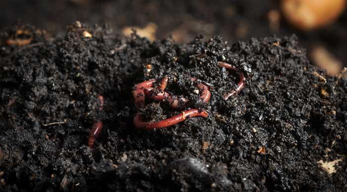 lombricompostage sacs biodégradables et compostables végéos